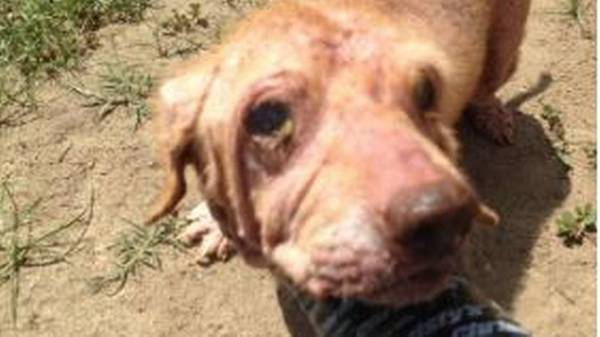 Police rescue 15 dogs from abandoned home covered in feces, trash. Dead cats found   The Fresno Bee