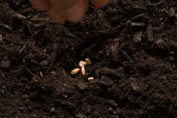Is seed investing still a local business?