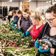 Polen en Roemenen zeggen eerder 'Ik vertrek', nu banen in Oost-Europa voor oprapen liggen