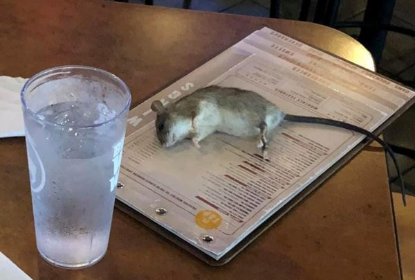 Live rat falls from ceiling and lands on table at California Buffalo Wild Wings   KSBY.com