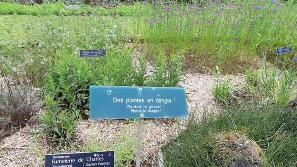 Liste rouge de la flore : 13% des espèces sont menacées - 13% van de plantensoorten bedreigd