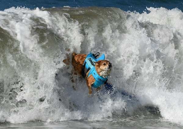 5 SoCal Beaches Where You Might Get Hit With A Wave Of Poop Water: LAist