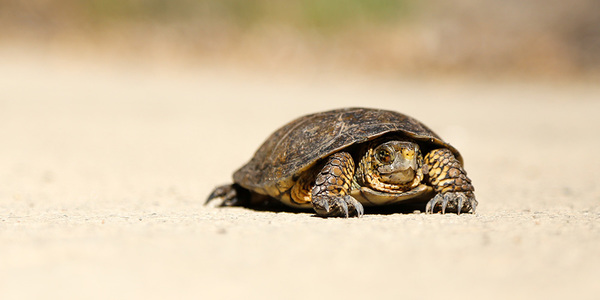 Steady and slow... like a tortoise. Credit: Nick Abrams on Unsplash