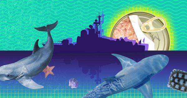 Wat één foto zegt over je blikje tonijn (en dat is meer dan enkel exotische bijvangst)