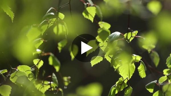 Glen Affric: A landscape worth restoring
