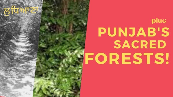 Sacred Forests: solution for Punjab's air & water crisis?