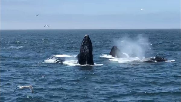 Whale watching season in full swing, boosting business on the Central Coast | KSBY.com