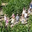 Na groeispurt is het maisdoolhof open