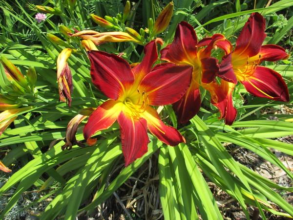 Neighborhood Flowers.
