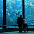 Good News: Families 'Sleep with the Fishes' at Aquarium - GV Wire