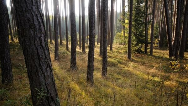 30 Millionen neue Bäume: Wie geht das in der Praxis?
