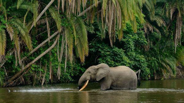 Wie Forscher AI verwenden, um Elefanten zu zählen