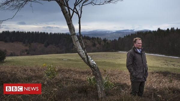 Climate change: Tree planting rise 'needs to happen quickly'