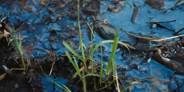Beware the information quagmire; it's muddy underfoot. Credit: Hayley Seibel on Unsplash