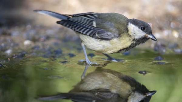 Rate of climate change is outpacing animals' ability to adapt