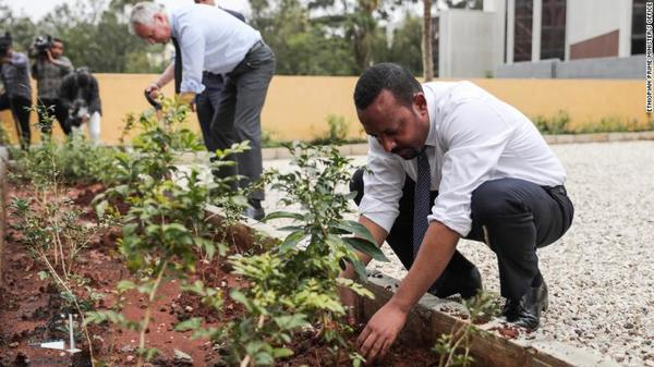 Ethiopia plants 350 million trees in a day, sets world record