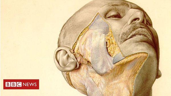 Dieses Anatomie-Buch aus der Nazizeit ist bei Chirurgen immer noch aktuell