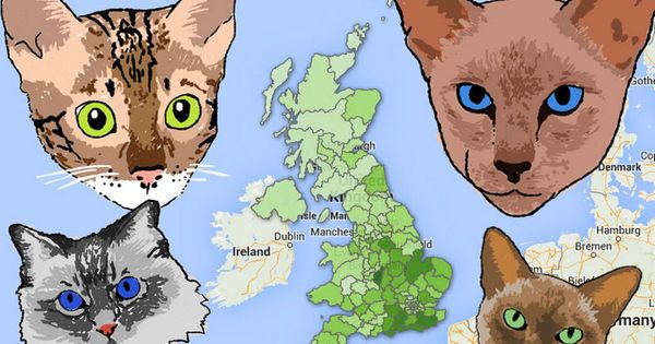 Cat Map of Britain: Where's the most cat-crazy place in the UK?