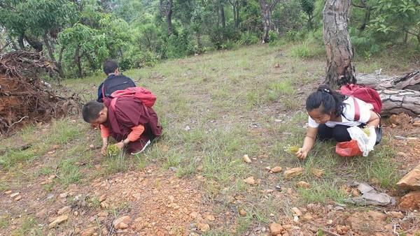 Gathering medicinal herbs in Pharping, Nepal