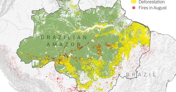 Was Daten und Satellitenbilder über die Feuer im Amazons-Gebiet aussagen