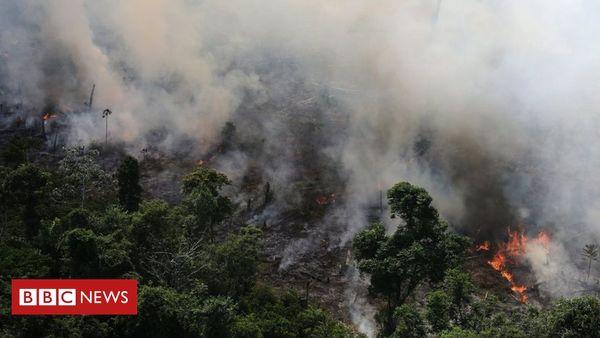 Die BBC beantwortet zehn häufig gestellte Leser-Fragen zu den Feuern im Amazonas