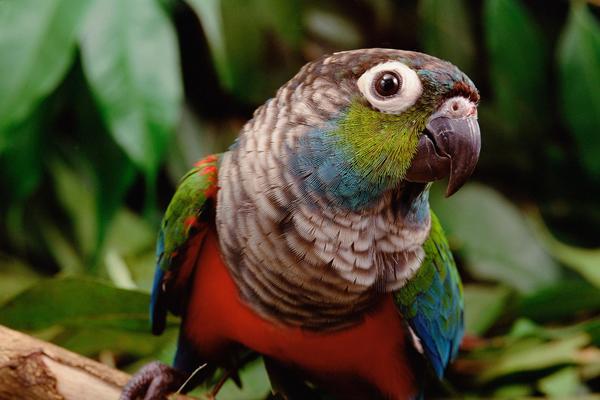 Was die Amazonas-Feuer für die Tiere bedeuten