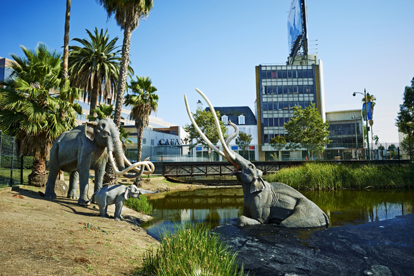The La Brea Tar Pits Are Being Reimagined — And You Can Vote On Their Future: LAist
