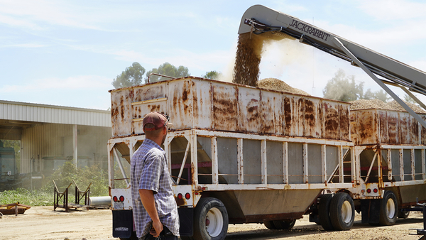 Here's how almonds get harvested in the Central Valley | abc30.com