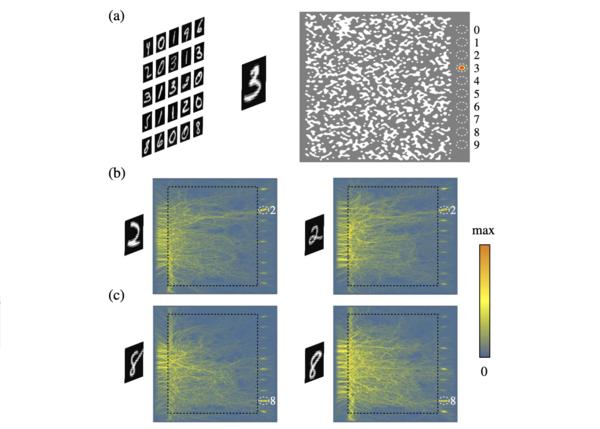 Illustration of how the nanophotonic neural medium (NNM) recognizes hand-written digits. (Khoram et al.))