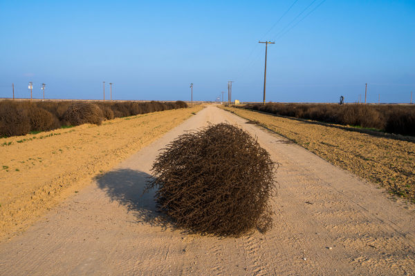 California's Meddlesome Tumbleweeds Could Grow Even More Menacing - Atlas Obscura