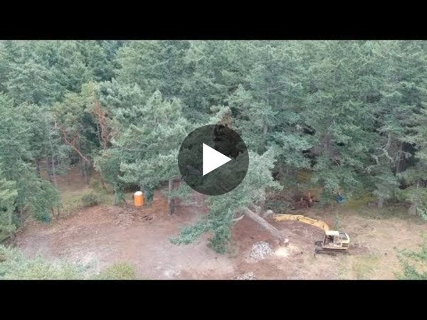 Tree Removal Highlights (and a drone crash)
