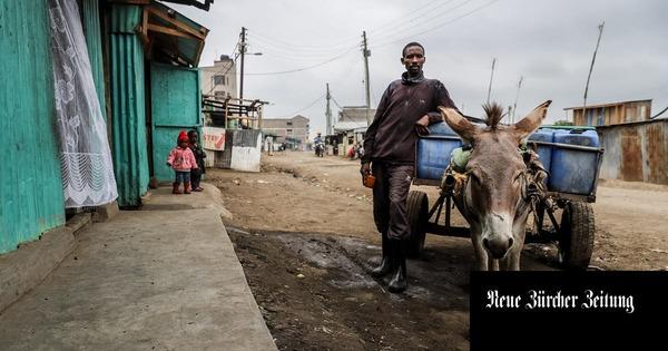 In Afrika werden jetzt Esel gewildert – um Gelatine für China zu produzieren