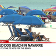 Dog beach proposed in Navarre 🐶