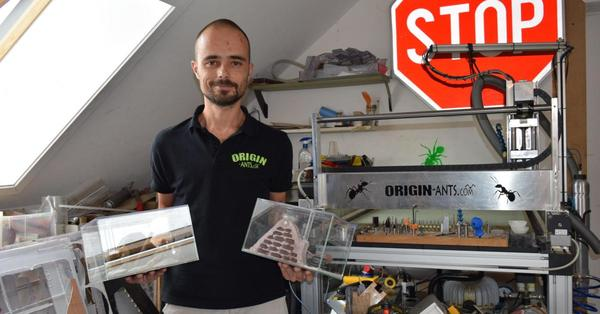 Un métier plutôt insolite à Stambruges - Stambruges heeft een mierenkweker