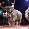 California lawmakers pass bill banning the use of wild and exotic animals at circuses | TheHill