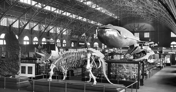 Fotogalerie: So großartig war 1904 die Weltausstellung in St. Louis