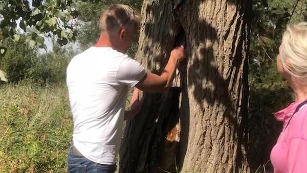 Huisbioloog ontdekt vleermuisverblijf op Kraaien-terrein (filmpje)   De Orkaan