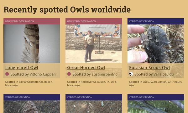 Owls Near Me: Diese Website zeigt euch, welche Eulen in der Nähe gesichtet wurden