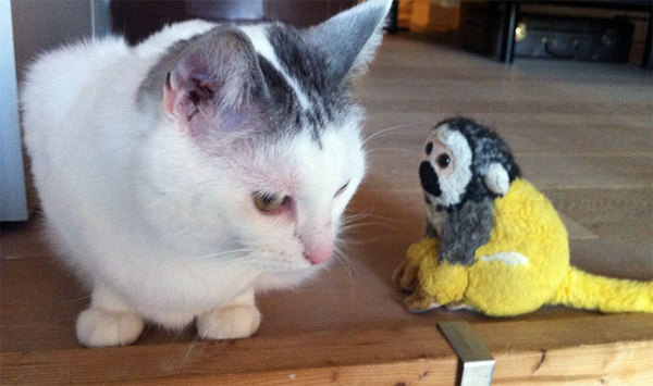 Barrie probeert een kat te snappen en dat is lastig (voor de kat ook trouwens).
