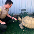 Tortoise returned home after wander around NorCal town | YourCentralValley.com