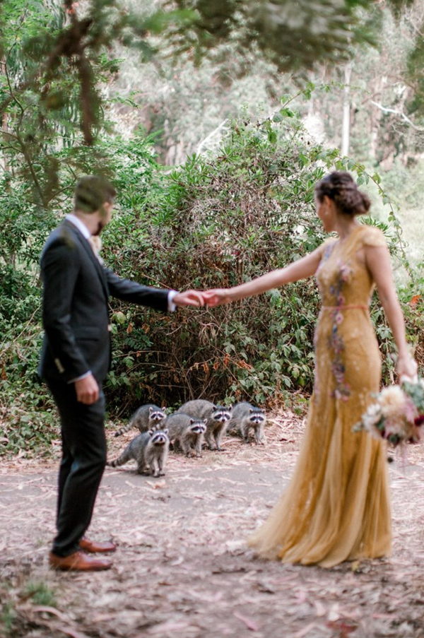 Family of raccoons photobomb couple's wedding shoot in Golden Gate Park - SFGate