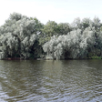 Waterschap wil 100 jaar oude bomen kappen