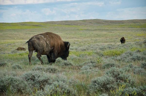 How big money is building a new kind of national park