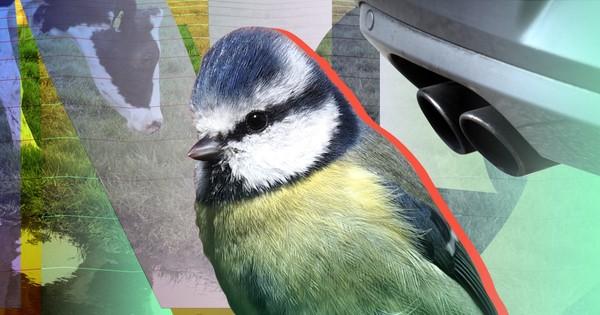Zeldzame vogels in gevaar door stikstofvervuiling
