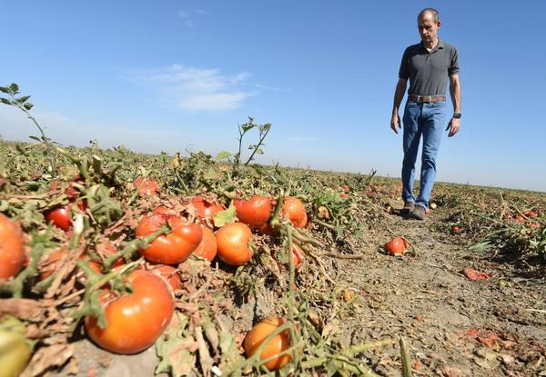 California families are hungry while a third of crops rot in fields | CalMatters
