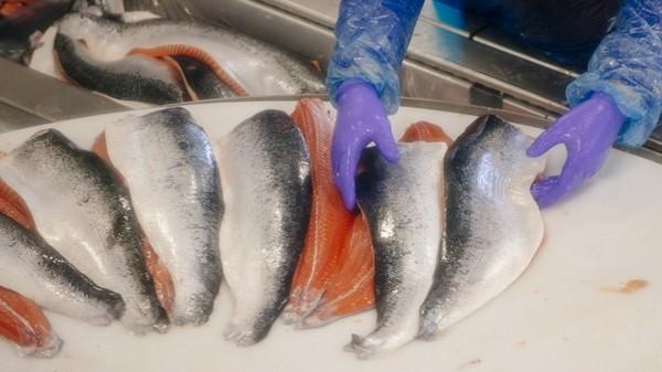 Umweltschutz: Evonik will Lachse zum Vegetarier machen