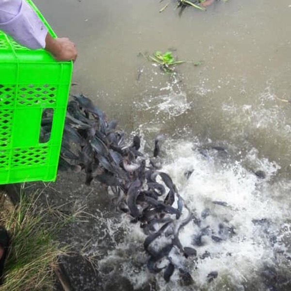 Fish Releasing With Tulku Migmar Tsering in Vietnam