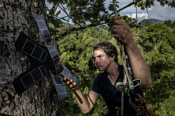 """Topher White installing a solar-powered listening unit in a rainforest on the Indonesian island of Sumatra in July."" (Ulet Ifansasti for The New York Times)"
