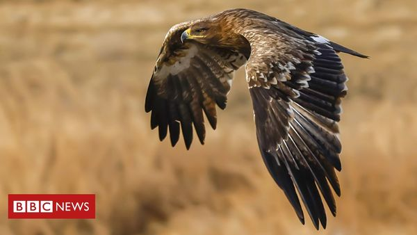 Migrating Russian eagles run up huge data roaming charges