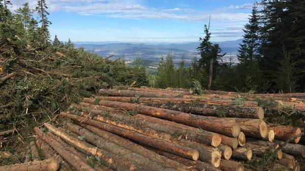 As the West burns, how do we bring more light than heat in Idaho's forest management debate?